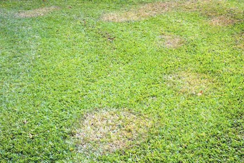 Help With Common Lawn Problems Turner Ace Hardware