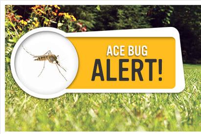 ace-bug-alert