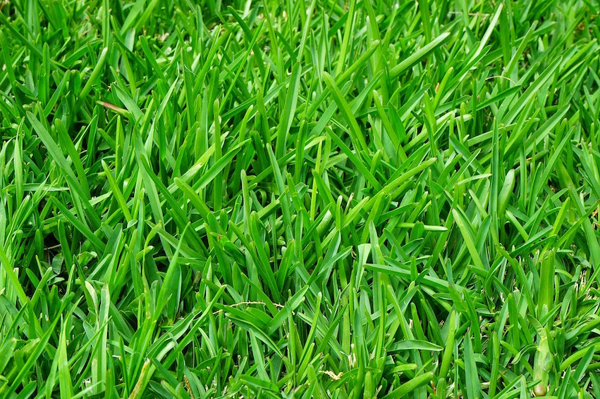 Help with Common Lawn Problems