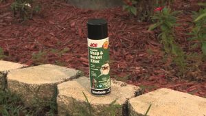 3 Ways to Control Bugs & Insects
